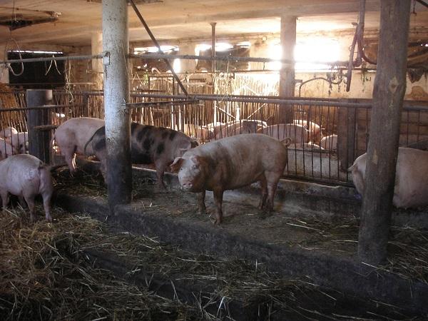 Was ist denn das für ein Schweinestall hier...?! (Foto: Bärbel selbst  / pixelio.de)