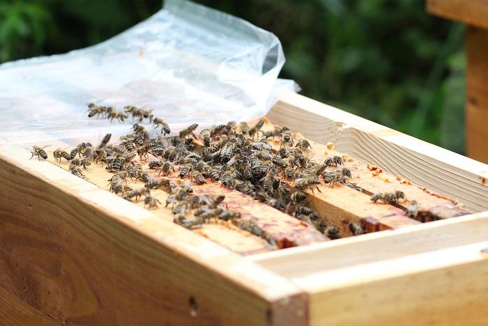 Bee Home soll beim Bestäuben helfen! (Foto: Maja Dumat  / pixelio.de)