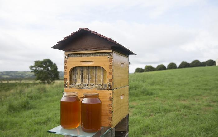 Mit Honig aus dem Zapfhahn wird Bienenzucht revolutioniert (Foto: IndieGogo)